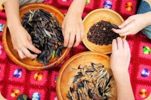 hands sorting_seeds